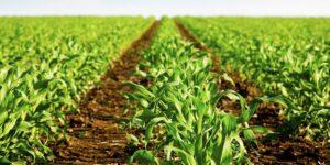 Mapfre Colombia utiliza seguimiento de riesgos y gestión de reclamaciones de su negocio agrícola