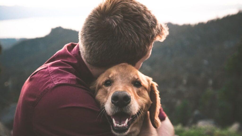 Ingresos de seguros de mascotas superarán los 11,600 mdd para 2027: Global Market Insights